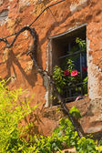 Wall of a house with a window and vines. — Stock Photo