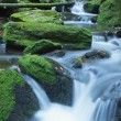 Peaceful flowing stream in the forest — Stock Photo