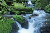 森で平和的な流れ — ストック写真