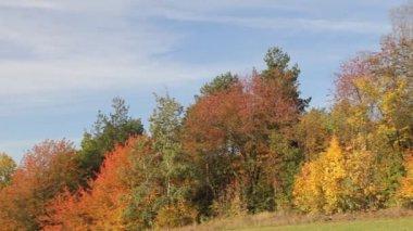 Sonbahar renkli ağaçlar — Stok video