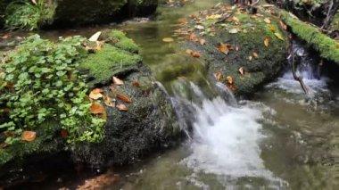 Corriente que fluye en el bosque de otoño — Vídeo de stock