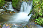 Fließender strom im herbst wald — Stockfoto