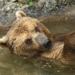 Brown bear taking bath in lake. — Stock Photo #20345243