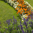 Blossoming colorful flowerbeds in summer  — Stock Photo