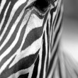Monochromatic zebra skin texture — Stock Photo #21149365
