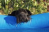 Eu quero nadar também — Fotografia Stock