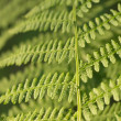 Bracken — Stock Photo #29781049
