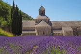 Senanque Abbey (Provence, France) — Stock Photo