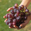 Red grapes in the womans hand. — Stock Photo