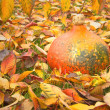 Pumpkin on fallen colorful leaves. — Stock Photo