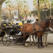 Horse-drawn carriage in Barcelona — Stock Photo