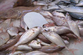 Unsorted fresh seafood — Stockfoto