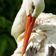 Stork in its natural habitat — Stock Photo #12499291