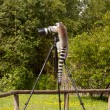 Foto Stock: Ring-tailed lemur sitting on tripod