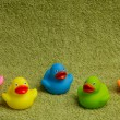 Stock Photo: Rubber ducks isolated, with room for text