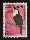SURINAME - CIRCA 1980: Stamp printed in Suriname — Stockfoto
