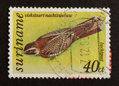 SURINAME - CIRCA 1980: Stamp printed in Suriname — Stock fotografie