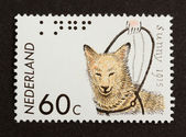 HOLLAND - CIRCA 1960: Stamp printed in the Netherlands — Stock fotografie