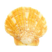 Petrified door ocean seashells — Stock Photo