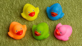 Rubber ducks isolated — Stock Photo