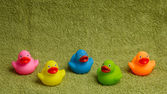 Rubber ducks isolated, with room for text — Stock Photo