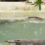 Crocodiles resting in the sun — Stock Photo