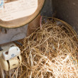 Nest of a sparrow in a cabinet with electrical meter - Stock Photo
