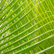 Palm Leave green line composition — Stock Photo