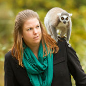 Ring-tailed lemur sitting on a womans shoulder — Stock Photo