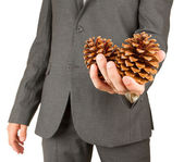 Man in grey suit is holding two pine cones — Stock Photo