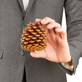 Man in grey suit is holding a pine cone — Stock Photo