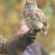 African Eagle Owl, selective focus — Stock Photo