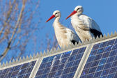 Pair of storks standing on a solar panel — Stock Photo