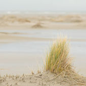 Dune-grass on the beach — Stock Photo