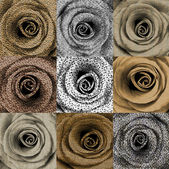 Compilation of roses with animal skin print — Stock Photo