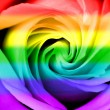 Rainbow flag rose — Stock Photo