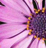 Close-up of a purple flower — Stock Photo