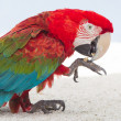 Stock Photo: Colorful parrot in captivity