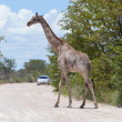 Giraffe in Etosha, Namibia — Stock Photo #38706487