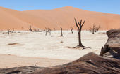 Dead acacia trees and red dunes of Namib desert — Foto de Stock