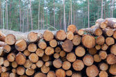 Forestry industry tree felling  — Stock Photo