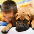 Stock Photo: Puppy bullmastiff with boy