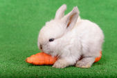 Rabbit with carrot — 图库照片
