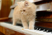 Cat and piano — Stockfoto