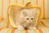Gattino nel cestino — Foto Stock