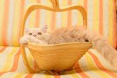 Katje in mand — Stockfoto