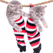 Kittens hanging washing line — Stock Photo