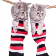 Stock Photo: Kittens hanging washing line