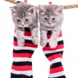 Kittens hanging washing line — Stock Photo #36845775