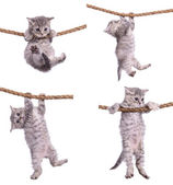 Kittens with rope — Stock Photo